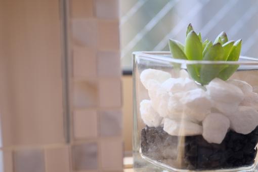 多肉植物 観葉植物 ニッチ インテリア 緑 植物 ガラス ソフト 余白 窓辺 横位置
