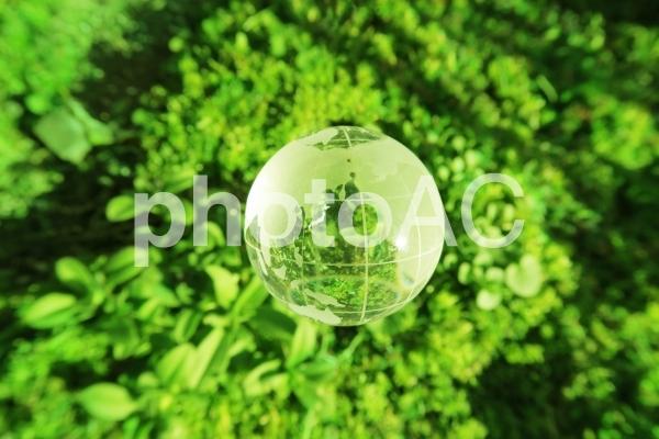 緑の背景と透明なガラス製の地球-エコイメージの写真