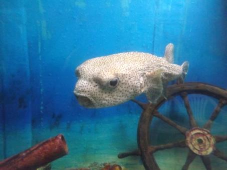 さかな 魚 フィッシュ すいぞくかん 水族館 おおきいさかな 大きい魚 大きいさかな おおきい魚 きれい 綺麗 すいそう 水槽 さわやか 爽やか いやされる 癒される おでかけ お出かけ aquarium fish