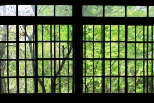 窓 窓辺 窓枠 窓ガラス ガラス越し 田舎 ガラス 新緑 緑 植物 樹木 木 葉 コントラスト コピースペース タイトル 古い 武家屋敷 屋敷 武家