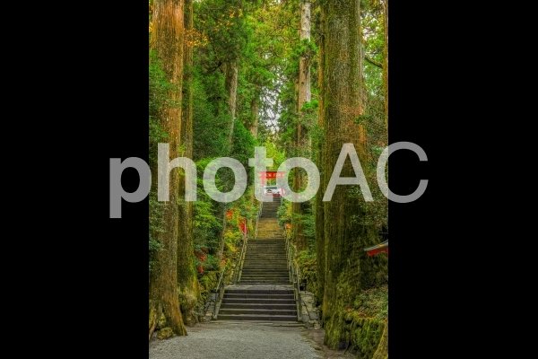 箱根神社!神聖なる参道の写真