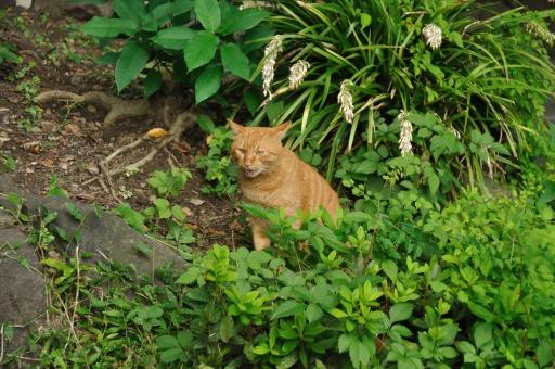 茶トラ ちゃとら ボヤく しゃべる 話す 猫 ねこ ネコ