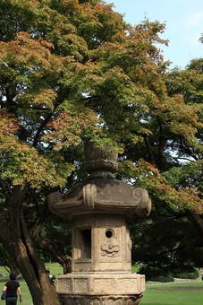 奈良 関西 日本 観光 観光地 旅行 自然 植物 風景 景色 景観 石 石材 燈籠 歴史 伝統 和風 木 樹木 森林 葉 葉っぱ 緑 幹 枝 空 雲 青空 芝生