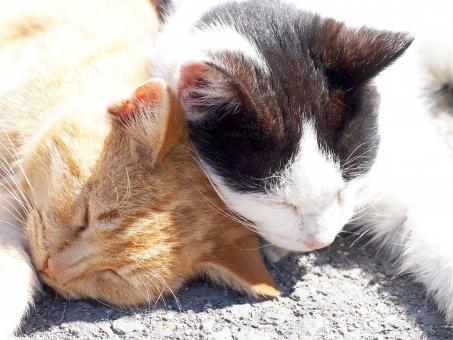猫 ネコ ねこ 猫島 ネコ島 ねこ島 島ねこ 島ネコ 島猫 のら猫 のらネコ のらねこ 野良ネコ 野良ねこ 野良猫 ノラねこ ノラ猫 ノラネコ 仲良し ペア カップル いちゃいちゃ べったり ラブ ラブラブ かわいい 昼寝 ひるね おひるね 春