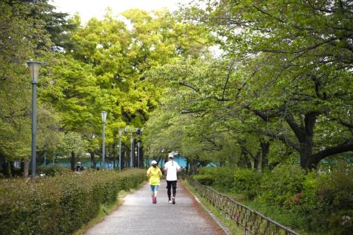 ランニング ジョギング マラソン 公園 ダイエット エクササイズ スポーツ 有酸素運動 二人 カップル 女性 男性 後ろ姿 緑 健康 運動 走る トレーニング 屋外 人物 街路樹 並木道 後姿 2人 早朝 夫婦