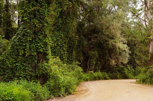山道 道 農道 じゃり道 田舎道 やま道 森 森の中 林 山林 石ころ 草むら 草わら 茂み 田舎 山の中 虫取り 植物 つる草 木 木々 茂み 日陰 ツタの葉 散策 ハイキング