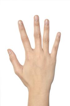 人物 背景 白 白背景 白バック 切り抜き パーツ ボディパーツ 腕 片手 ポイント 指 手首 ジェスチャー 身ぶり 肌 余白  シンプル ハンドパーツ 右手 手ぶり 人の手 手の甲 ハーイ 手を挙げる 挙手 パー ジャンケン