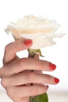 バラ 白バラ 花 フラワー 植物 花びら 花弁 がく 茎 白 ホワイト 女性 おんな 女 ウーマン レディ 肌 素肌 マニキュア 爪 ネイル 赤 手 右手 手指 指先 ハンド 持つ つかむ 触る 触れる 摘む ハンドポーズ ポーズ ハンドパーツ パーツ 白バック 白背景