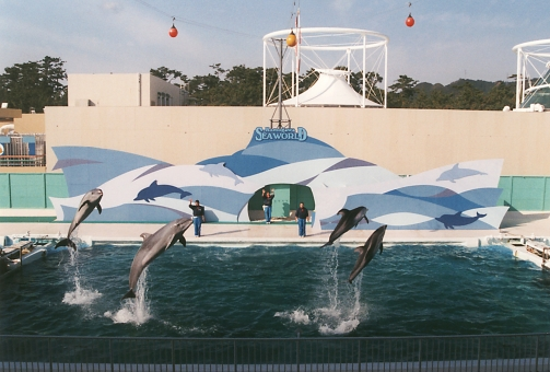 satochi サトチ イルカ いるか 海豚 dolphin ショー show 動物 どうぶつ ドウブツ animal 鴨川シーワールド 鴨川 かもがわ カモガワ chiba 千葉 ちば チバ ニホン 日本 にほん japan