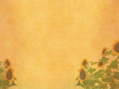 ひまわり ヒマワリ 向日葵 夏 花 植物 自然 草花 素材 空間 ナチュラル テクスチャ 質感 背景 背景素材 バックグラウンド テキストスペース コピースペース ベージュ 枠 フレーム 半透明 透ける 透かし 花びら