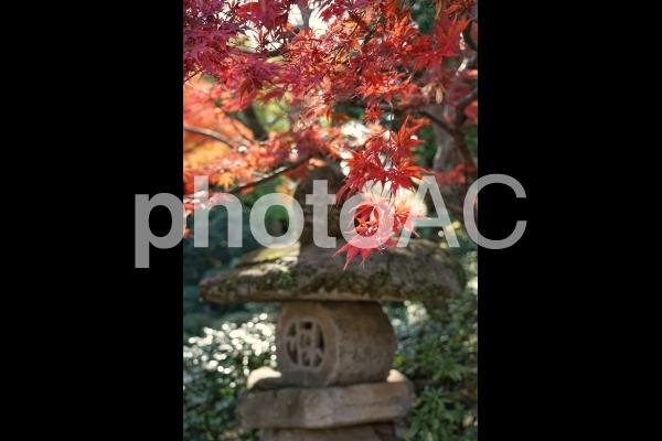 紅葉と石灯籠の写真