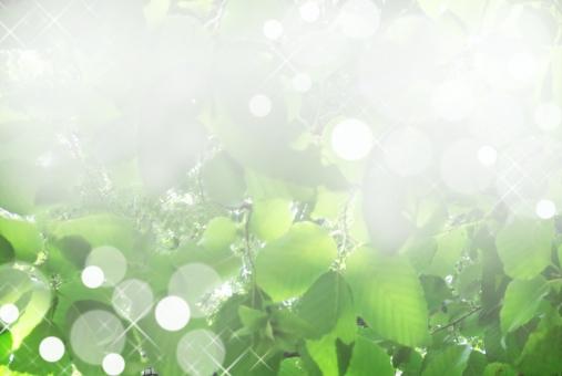 カベ 壁 かべ テクスチャー 季節 きれい 薄い うすい 鮮やか ぼかし 光彩 きらきら 星 丸 円 かわいい 6月 晴れ 素材 無人 青空 水色 寒色 ブルー 風 バックグランド バックイメージ 背景デザイン 壁紙 グラデーション 柔らかい ナチュラル 真夏 日中 天気 ライト 森 林 アロマ 8月 葉 葉っぱ 日光 背景 バックグラウンド 背景写真 木漏れ日 キラキラ 庭 清涼感 木の葉 はっぱ 自然 植物 グリーン エコ エコロジー 環境 森林 森林浴 いやし リラクゼーション やすらぎ 安らぎ テクスチャ 青葉 若葉 緑 夏 初夏 光 明るい イメージ 5月 背景素材 樹木 木 爽快 風景 景色 ミドリ 屋外 黄緑 マイナスイオン 6月 7月 7月 8月 やさしい 優しい 癒し 新緑 リラックス バック 背景画像 清涼 みどり 爽やか