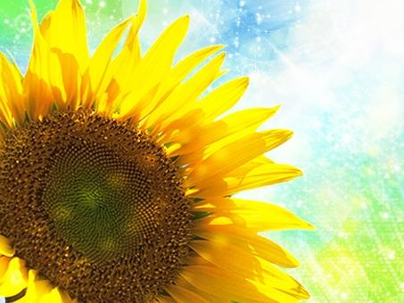 ひまわり 向日葵 ヒマワリ 空 夏 夏の花 植物 ひまわりと空 空とヒマワリ 空と向日葵 太陽 明るい 背景 風景 バックイメージ バックグラウンド 黄色 summer 自然 植物 テクスチャー テクスチャ 向日葵畑 花畑 背景素材 環境 園芸 青空 鮮やか 華やか