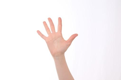 5 5 五 ご ゴ 5番 5番 五番 五つ 手 ハンド ハンドパーツ 人物 女性 背景 白 白背景 白バック 切り抜き パーツ ボディパーツ 腕 指 手首 ジェスチャー 身ぶり 仕草 肌 コピースペース 余白 シンプル 片手 数字 ポイント ビジネス 数える カウント 数字 番号 挙手 手を挙げる パー 手を広げる 手のひら 右手