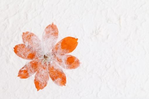 花 花びら コスモス 植物 和紙 紙 ペーパー 押し花 手漉き 一枚 1枚 一つ 手漉き紙 手すき 手すき紙 模様 デザイン 工芸 背景 背景イメージ 背景素材 テクスチャ テクスチャー 質感 バックグラウンド イメージ 日本 日本文化 伝統文化 文化 皺紙 和風 壁紙 繊維 スタジオ撮影 飾り しわ 皺 でこぼこ 粗い アップ クローズアップ 余白 コピースペース オレンジ色