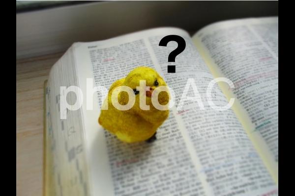 語学学習 初心者 イメージの写真