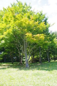 山奥 山 深緑 緑 グリーン 新鮮 空気 酸素 空 快晴 晴れ 晴天 曇り 白い雲 自然 環境 問題 エコ 青空 ブルースカイ 空 一本木 樹木 植物 芝 広場 黄緑色 鮮やか 木漏れ日 明るい 大きい