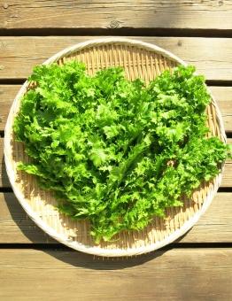ワサビ菜 菜 葉 リーフ 山葵 サラダ 野菜 辛 ざる ベジタブル