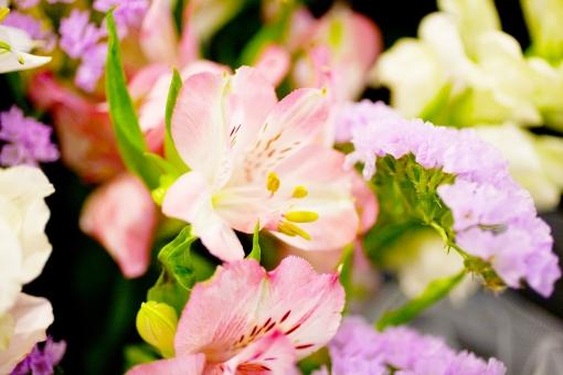 葬儀場 葬式 白菊 菊 白 告別式 通夜 葬儀のイメージ 植物 花 コピースペース バックグラウンド 葬儀イメージ 悲しみ 祭壇 紫の花 紫 蕾 つぼみ 咲く 終活 思い 寂しさ 葬儀 死 ユリ ゆり