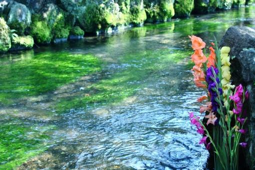 自然・風景 植物 小川 水辺 川辺 生け花 ようこそ いらっしゃいませ 清々しい 夏イメージ 夏景色 お盆休み 盆イメージ 涼し気な 水中花 梅花も 光がさす 綺麗な水 川の流れ 待ち受け画面 ポストカード コピースペース 背景 野外アウトドア エコ・環境 七月・八月 日本の美 日本の風情 日本の心 旅行イメージ
