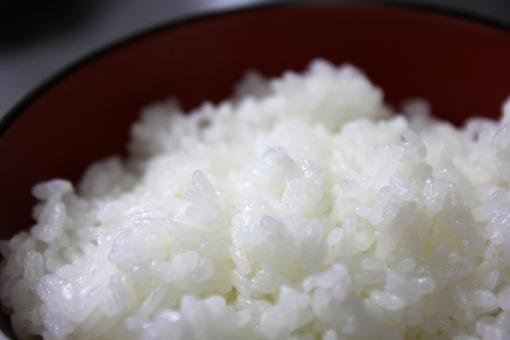 ごはん ゴハン 御飯 めし メシ 飯 お米 おこめ オコメ 白米 白めし 米 コメ ライス RICE Rice rice 日本 JAPAN japan 和食 炭水化物 カロリー 日本食 WASHOKU ワショク washoku OKOME okome ご飯