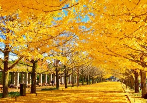 紅葉 秋 木 もみじ 落ち葉