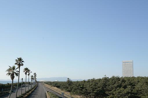 自然 風景 景色 屋外 野外 快晴 晴天 晴れ 植物 日南海岸 九州 宮崎県 観光 旅行 トラベル 海 海岸 海岸線 ドライブ リアス式海岸 南国 車 道路 走る 疾走 爽快 波 椰子の木 ヤシの木