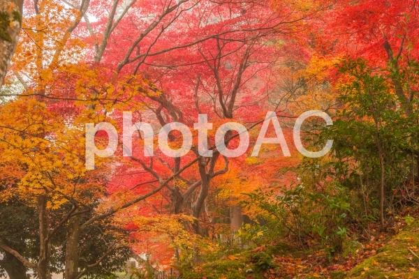 錦秋・京都絵巻!苗秀寺の紅葉の写真