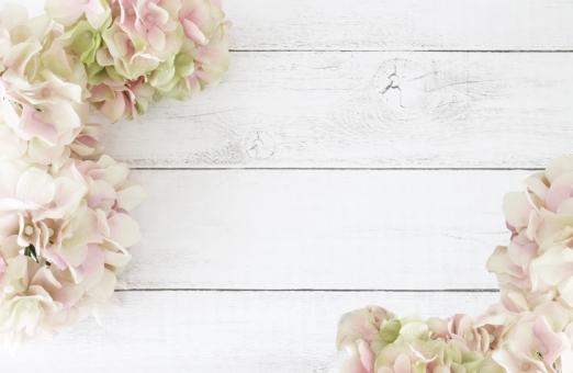 あじさい 花 背景の写真