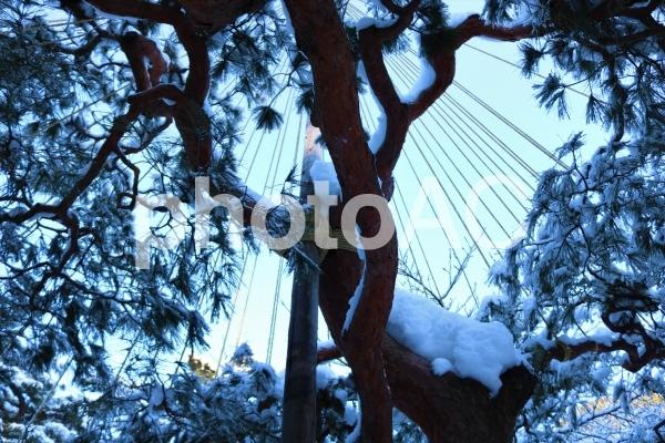 冬の雪吊りの写真