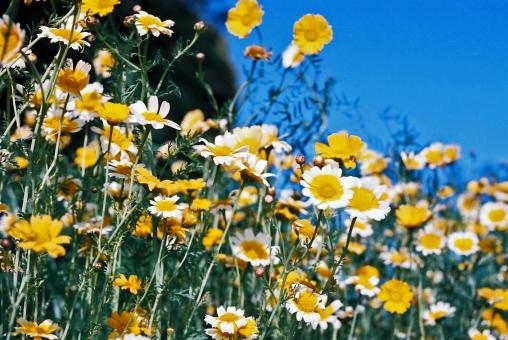 花のある風景の写真