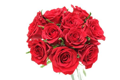 ばら バラ 花束 ブーケ 花 愛 美 愛情 情熱 熱烈な恋 植物 フラワー 種子植物 花弁 花びら 生花  葉 葉っぱ 赤い花 白背景 白バック ホワイトバック 5月 6月 10月 11月 ローズ レッドローズ