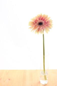 お花     ガーベラ 黄色     花      植物     花びら     無人     フラワー 逆光 白バック コピースペース 瓶 花瓶 水 床 一輪 一輪挿し 木 白壁
