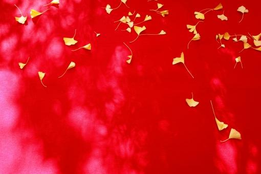 落ち葉 葉 銀杏 イチョウ いちょう 秋 黄色 赤 赤色 黄葉 葉っぱ 背景 バックグラウンド 布 絨毯 じゅうたん 敷物 敷布 秋イメージ 自然 植物 イメージ 落ちる 散る 背景素材 背景イメージ 落葉 枯葉 枯れ葉 一面 いちょうの葉 銀杏の葉 屋外 沢山 たくさん 余白 コピースペース しょうぎ 床几 床机 縁台 カラフル 色とりどり 無人 模様 パターン 明るい クロス