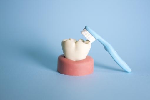歯磨き はみがき 歯みがき ハミガキ 歯ブラシ 歯 歯科 虫歯 虫歯予防 デンタル 歯医者 デンタルクリニック