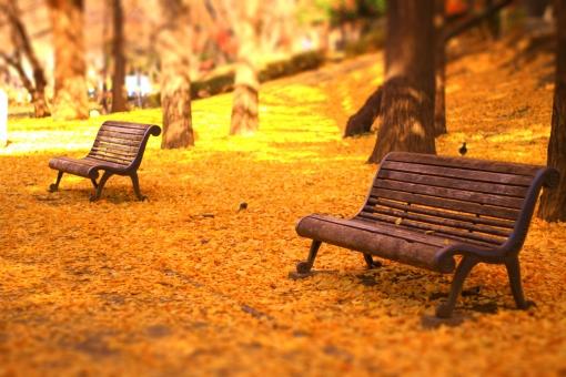 ジオラマ風のベンチと紅葉の絨毯の写真