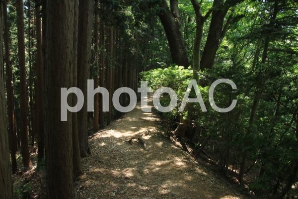 尾根道2の写真