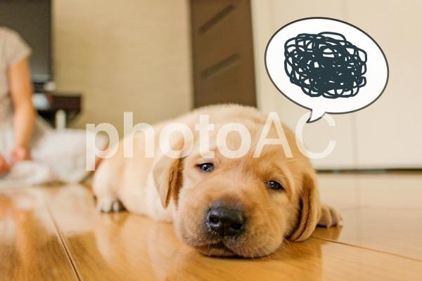 ふき出し子犬 モヤモヤ1の写真