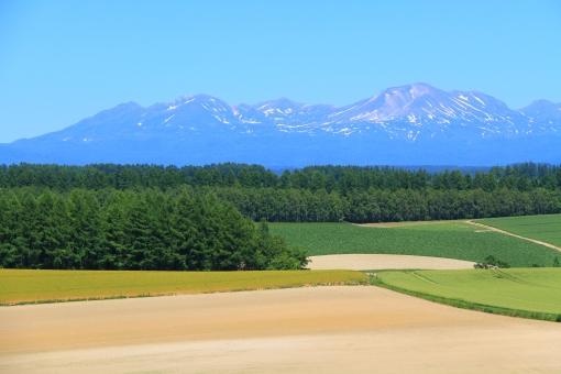 大雪山系 美瑛の丘 美瑛 富良野 北海道 畑 夏 青空 山 残雪 きれい 綺麗 美しい 風景 景色 背景 晴天 快晴 お天気 雲一つない青空 快適 爽快 さわやか 爽やか 青 緑色 風 暑さ 暑い 涼しい 涼しげ 遠くの山並み 雄大 広大 広い 観光地