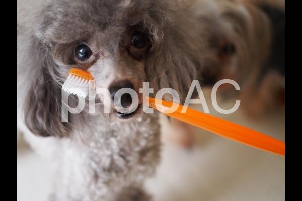 歯磨きするよ♪の写真