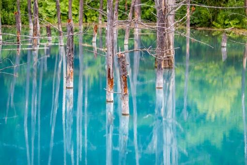 富良野 青い池 北海道 青 旅行 北の国から 湖 背景