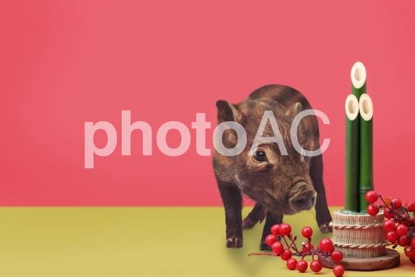 うりぼうのお正月3の写真