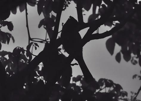白黒 モノクロ モノトーン アート アート写真 鳥 とり トリ 動物 生き物 鳥類 樹木 枝 葉 葉っぱ シルエット 植物 自然 環境 樹 木 小鳥 空 景色 風景