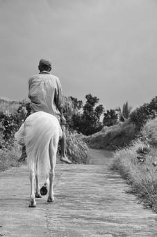 自然 植物 草 野草 雑草 野生 葉 葉っぱ 木 樹木 道 通路 馬 動物 生き物 人物 成人 交通 歩く 乗せる 乗る 進む 背後 後姿 空 風景 景色 フィリピン 外国 熱帯 南国 東南アジア 島国 モノクロ 白黒 グレー ねずみ色 灰色 地面