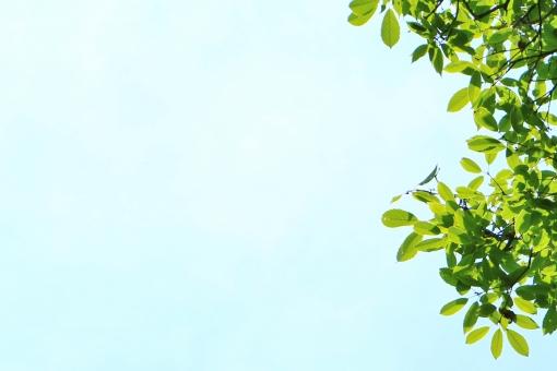 青空 空 青い空 晴れ 快晴 晴天 青色 空色 水色 葉っぱ 葉 グリーン leaf リーフ 緑 緑色 植物 自然 風景 背景 壁紙 テクスチャ 素材 若葉 若葉色 重なり 涼やか 涼しさ 爽やか 爽快 気持ちいい 気持ち良い 癒し 初夏 夏