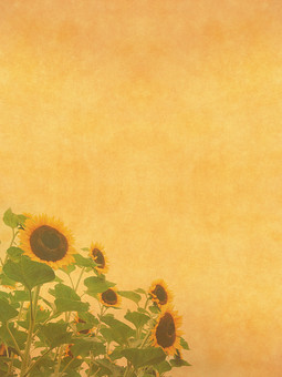 ひまわり ヒマワリ 向日葵 夏 花 植物 自然 草花 素材 空間 ナチュラル テクスチャ 質感 背景 背景素材 バックグラウンド テキストスペース コピースペース ベージュ 枠 フレーム 半透明 透ける 透かし 花びら 加工 写真加工