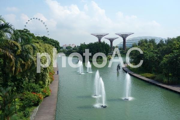 シンガポール ガーデンズバイザベイ 噴水 シンガポールフライヤー スーパーツリーグローブの写真