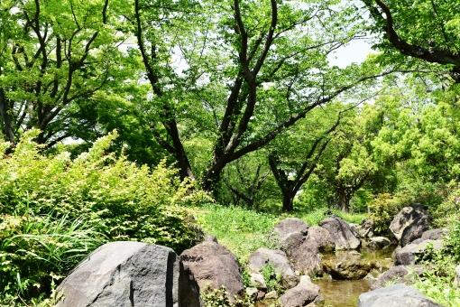 新緑 しんりょく 3月 4月 5月 6月 葉 葉っぱ 緑 黄緑 みどり きみどり 自然 綺麗 爽やか 見上げる 人気 植物 樹木 新鮮 森 林 公園 グリーン 暖かい 季節 若草色 若葉 木洩れ日 木漏れ日 こもれび 明るい 気分 最高 気持ちが良い 空気 クリーン 森林浴 背景 テクスチャ 壁紙 バックグラウンド ヒーリング リラックス 癒し マイナスイオン 初夏 リラクゼーション 涼しい セラピー エコ eco アップ 可愛い かわいい 小さい 雑草 草原 野原 散歩 散歩道 石畳 橋 石の橋 川 流れる 小川 石 岩 春 夏 秋 景色