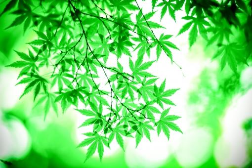 緑の葉と光の写真