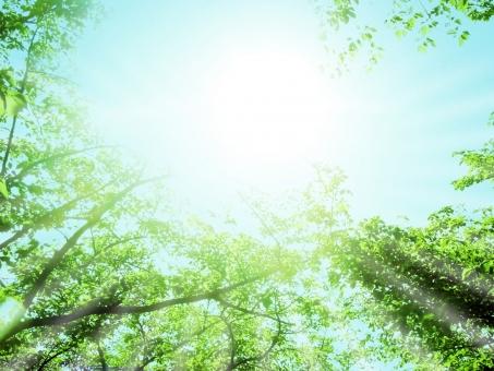空 大空 青空 大空 スカイ wood 風景 景色 反射 バック 放射 緑 グリーン 黄緑 新緑 明るい 林 山毛欅 ブナ林 山毛欅林 ぶなの木 樹木 自然 春 初夏 里山 癒し リラクゼーション 木 木の葉 木漏れ日 輝 フラッシュ お日様 日光浴 web素材 web背景 葉 日本 植物 屋外 壁紙 背景 背景素材 バックグラウンド 光 環境 エコ さわやか 爽やか 森 森林 木々 葉っぱ 枝 眩しい まぶしい こもれび チラシ背景 自然背景 大自然背景 夏 成長